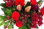 Kim Large Red(Kim Large Red)