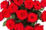 Roos Red Naomi Large (20 stuks)(Roos Red Naomi Large (20 stuks))